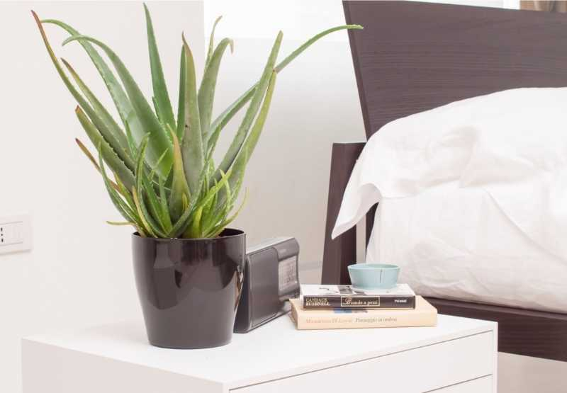 Insonnia: tenere le piante in camera da letto migliora il sonno ...