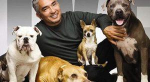 addestratore cani